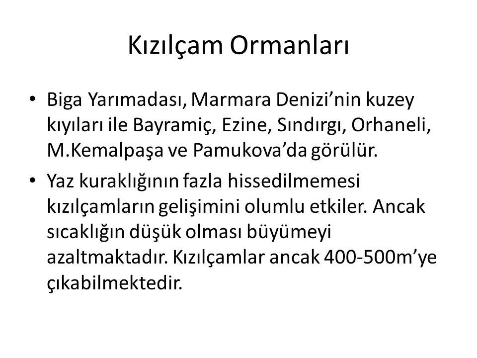 Kızılçam Ormanları Biga Yarımadası, Marmara Denizi'nin kuzey kıyıları ile Bayramiç, Ezine, Sındırgı, Orhaneli, M.Kemalpaşa ve Pamukova'da görülür.