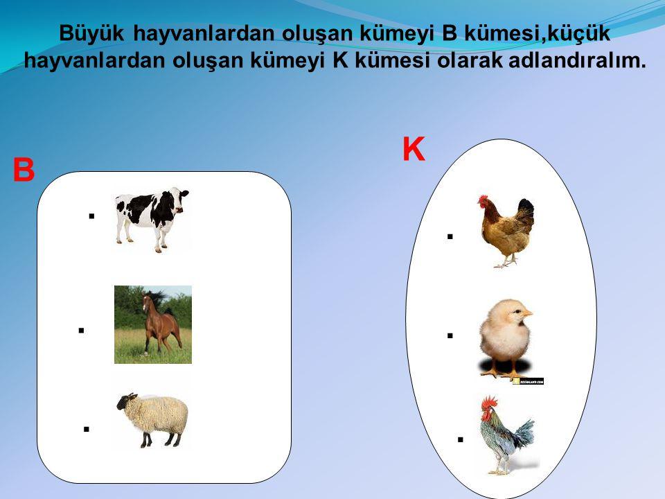 Büyük hayvanlardan oluşan kümeyi B kümesi,küçük hayvanlardan oluşan kümeyi K kümesi olarak adlandıralım.