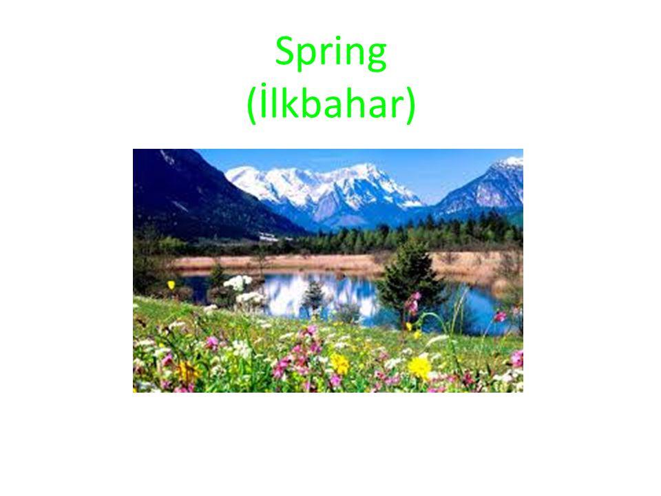 Spring (İlkbahar)