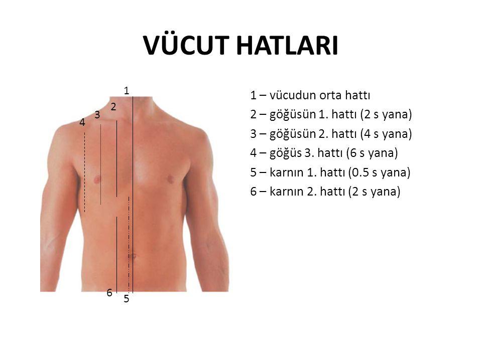 VÜCUT HATLARI 1 – vücudun orta hattı 2 – göğüsün 1. hattı (2 s yana)