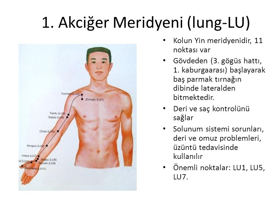 1. Akciğer Meridyeni (lung-LU)