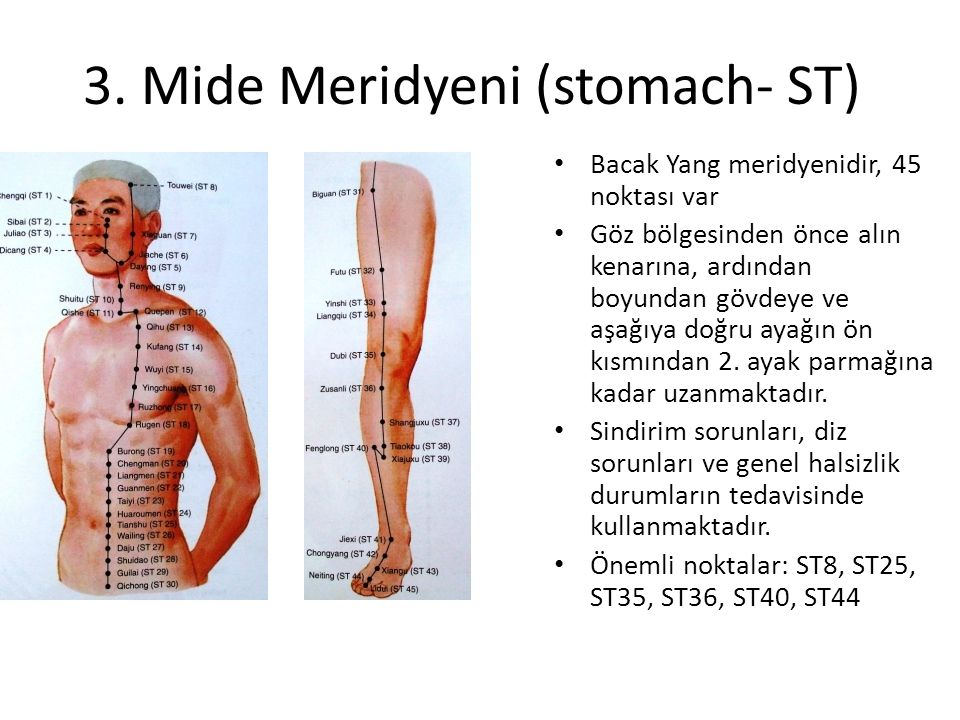 3. Mide Meridyeni (stomach- ST)
