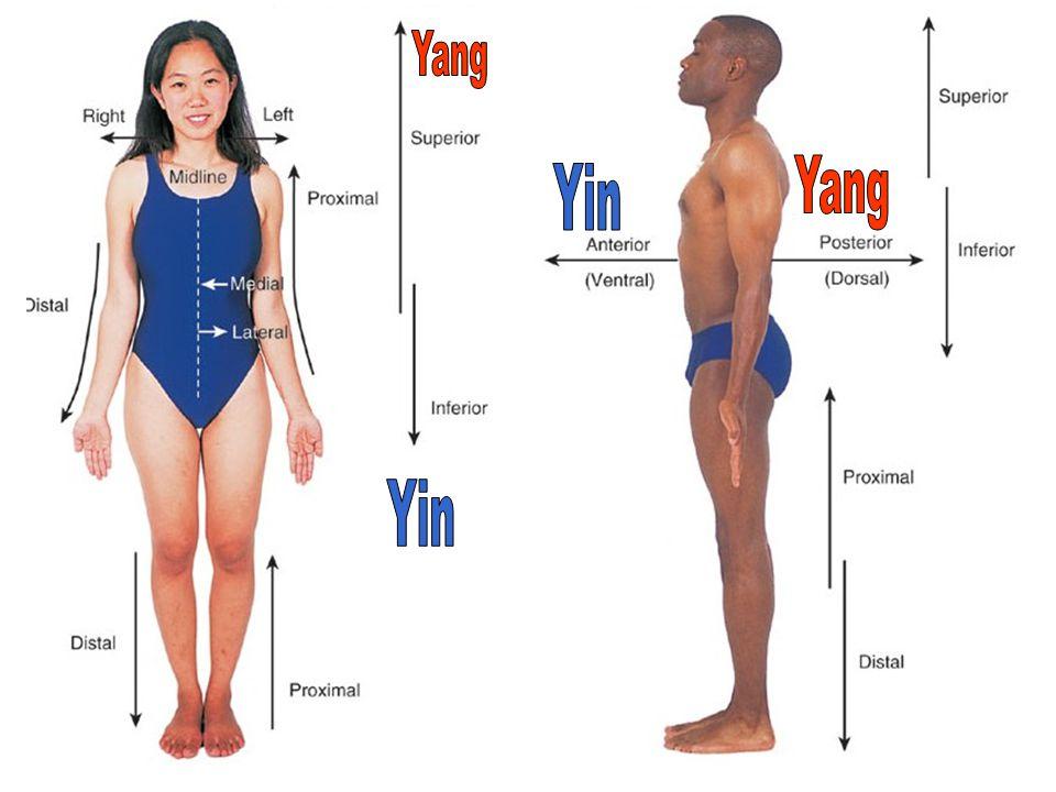 Yang Yang Yin Yin