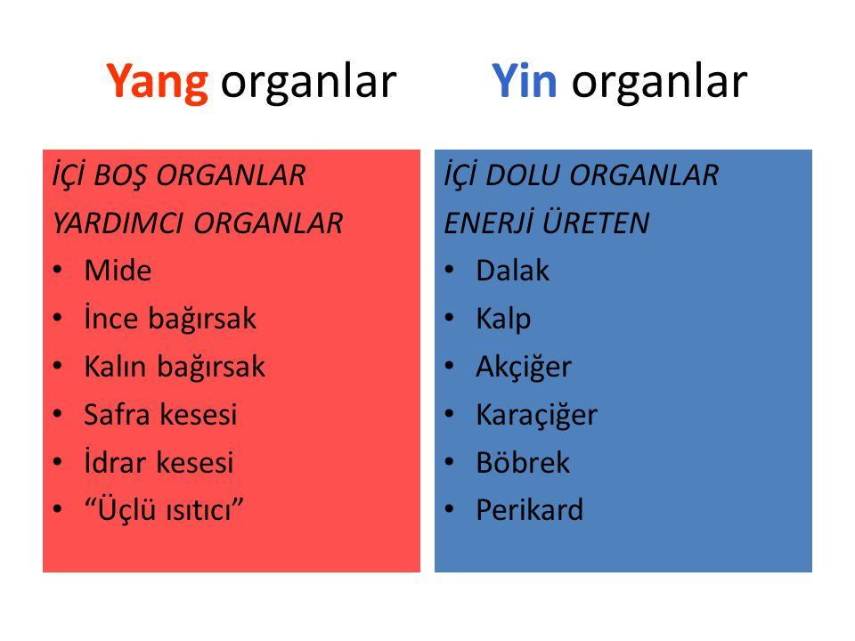 Yang organlar Yin organlar