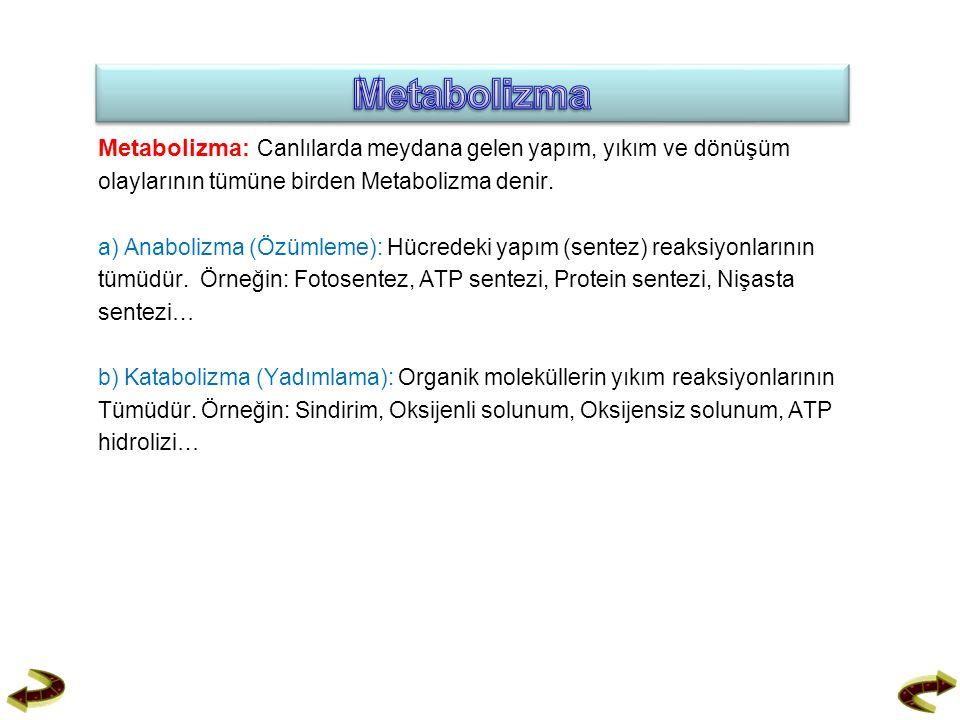 Metabolizma Metabolizma: Canlılarda meydana gelen yapım, yıkım ve dönüşüm. olaylarının tümüne birden Metabolizma denir.