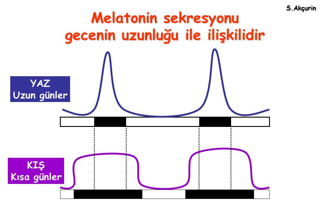 Melatonin sekresyonu gecenin uzunluğu ile ilişkilidir