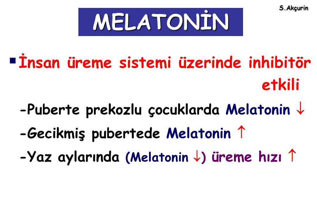 MELATONİN İnsan üreme sistemi üzerinde inhibitör etkili