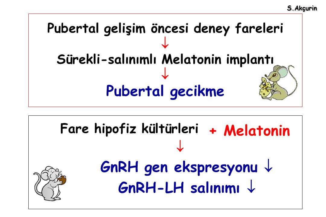 S.Akçurin Pubertal gelişim öncesi deney fareleri  Sürekli-salınımlı Melatonin implantı  Pubertal gecikme.