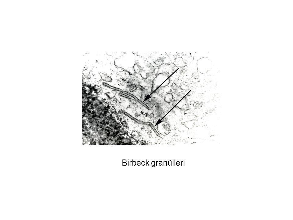 Birbeck granülleri