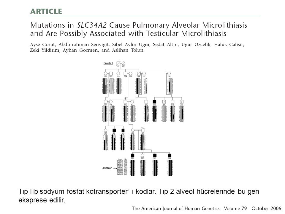 Tip IIb sodyum fosfat kotransporter' ı kodlar