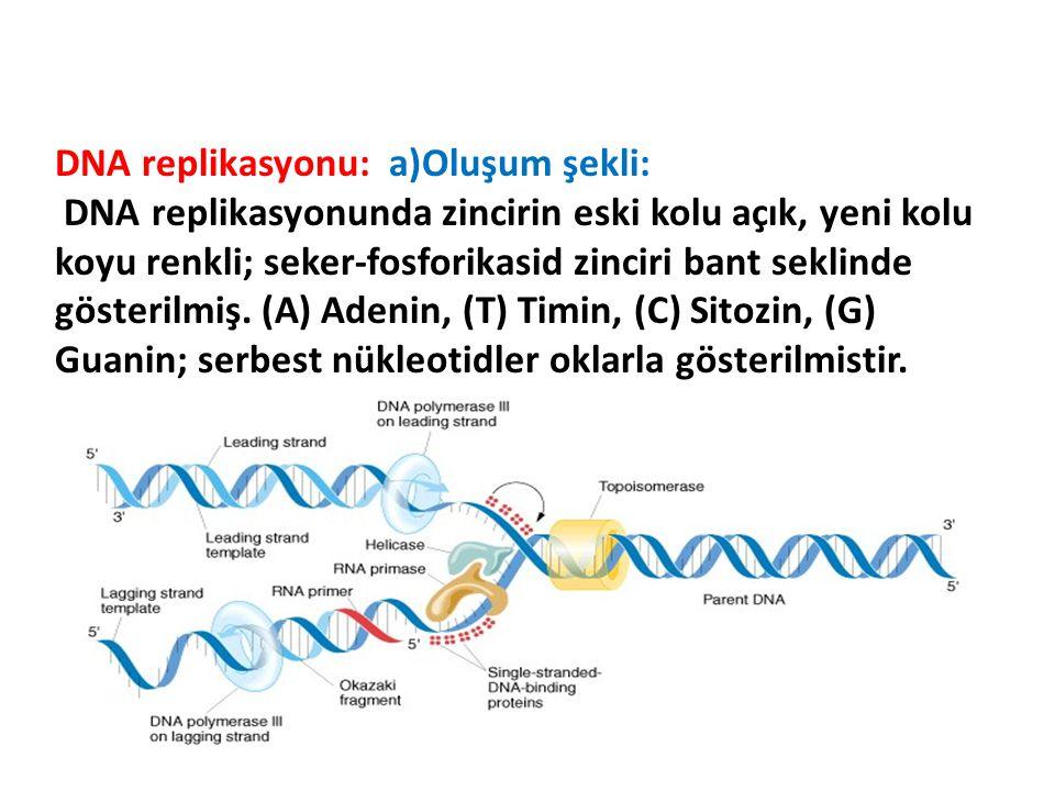 DNA replikasyonu: a)Oluşum şekli:
