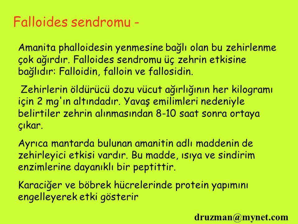 Falloides sendromu -