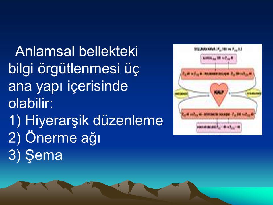 Anlamsal bellekteki bilgi örgütlenmesi üç ana yapı içerisinde olabilir: 1) Hiyerarşik düzenleme 2) Önerme ağı 3) Şema