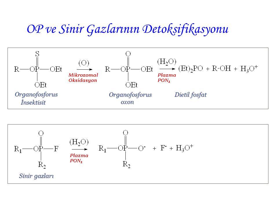 OP ve Sinir Gazlarının Detoksifikasyonu