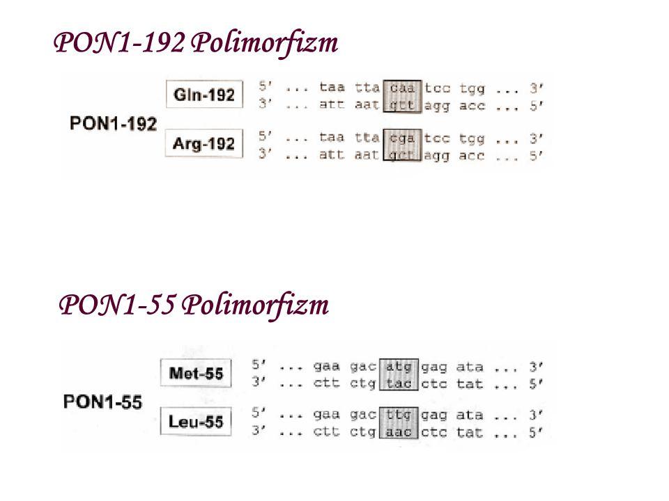 PON1-192 Polimorfizm PON1-55 Polimorfizm