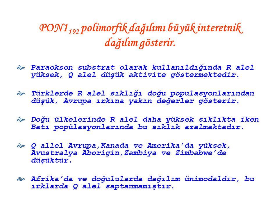 PON1192 polimorfik dağılımı büyük interetnik dağılım gösterir.