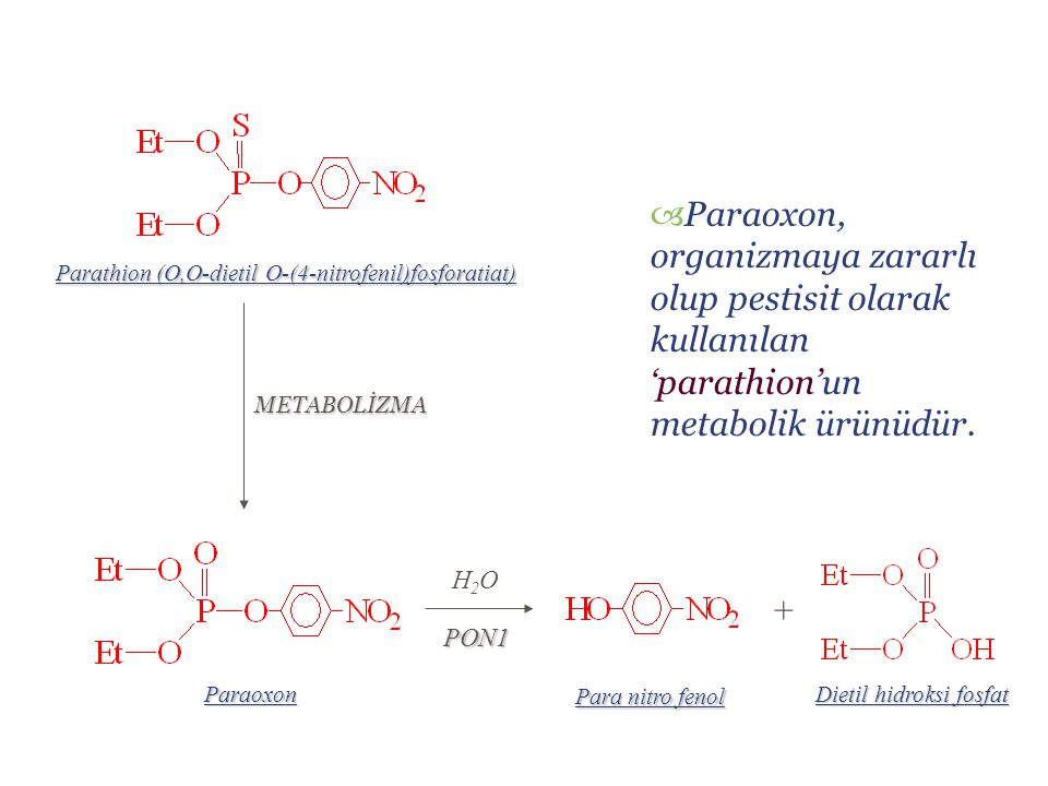 Paraoxon, organizmaya zararlı olup pestisit olarak kullanılan 'parathion'un metabolik ürünüdür.
