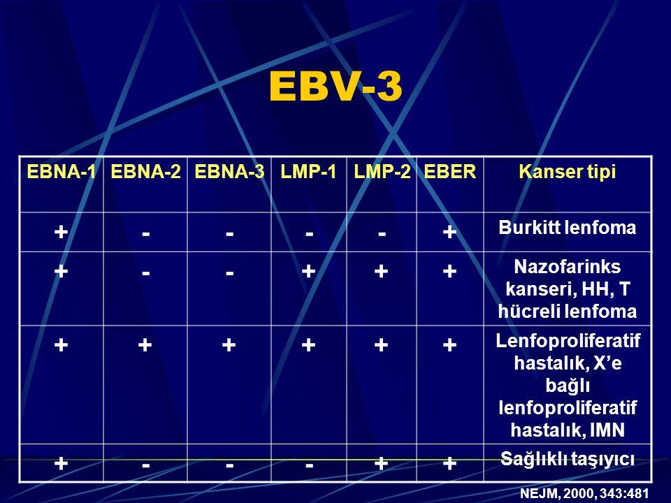 EBV-3 + - EBNA-1 EBNA-2 EBNA-3 LMP-1 LMP-2 EBER Kanser tipi