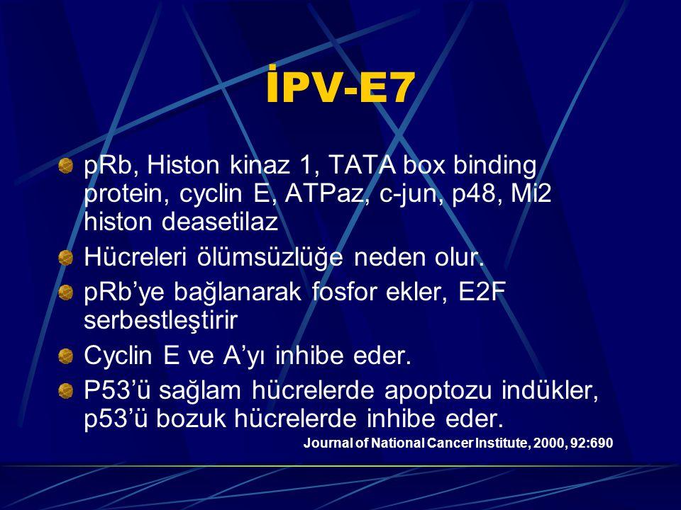 İPV-E7 pRb, Histon kinaz 1, TATA box binding protein, cyclin E, ATPaz, c-jun, p48, Mi2 histon deasetilaz.