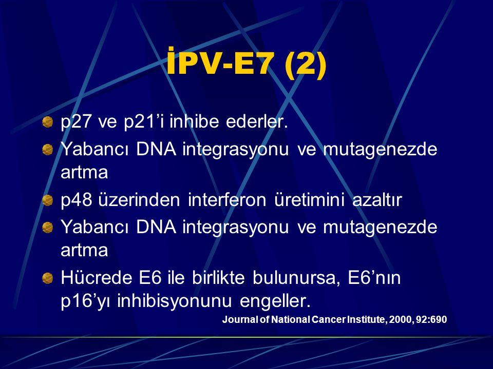 İPV-E7 (2) p27 ve p21'i inhibe ederler.