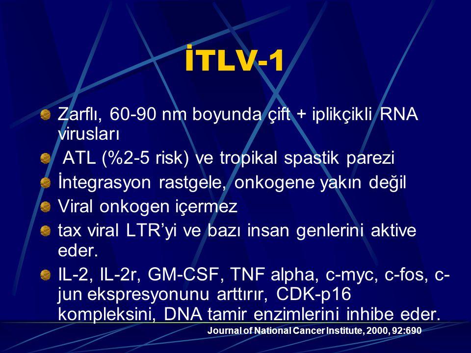 İTLV-1 Zarflı, 60-90 nm boyunda çift + iplikçikli RNA virusları