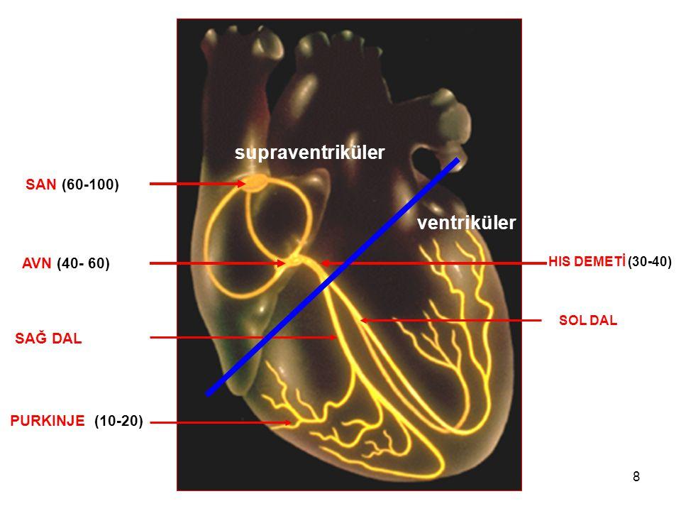 supraventriküler ventriküler SAN (60-100) AVN (40- 60) SAĞ DAL