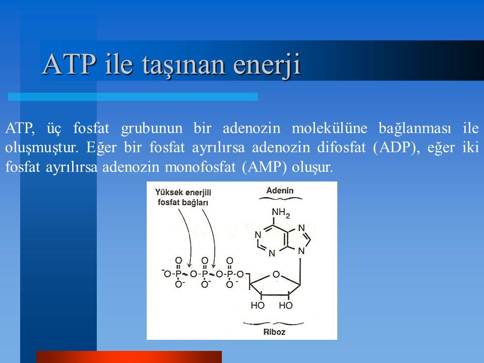 ATP ile taşınan enerji