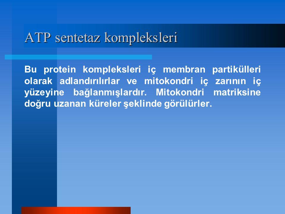 ATP sentetaz kompleksleri