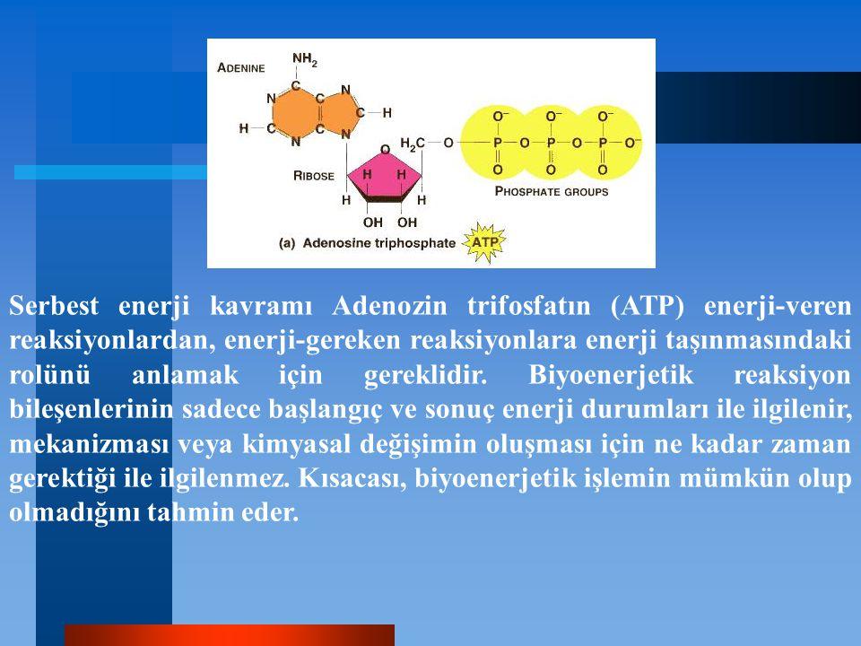 Serbest enerji kavramı Adenozin trifosfatın (ATP) enerji-veren reaksiyonlardan, enerji-gereken reaksiyonlara enerji taşınmasındaki rolünü anlamak için gereklidir.