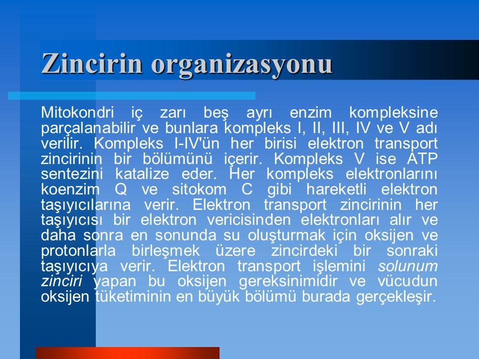 Zincirin organizasyonu