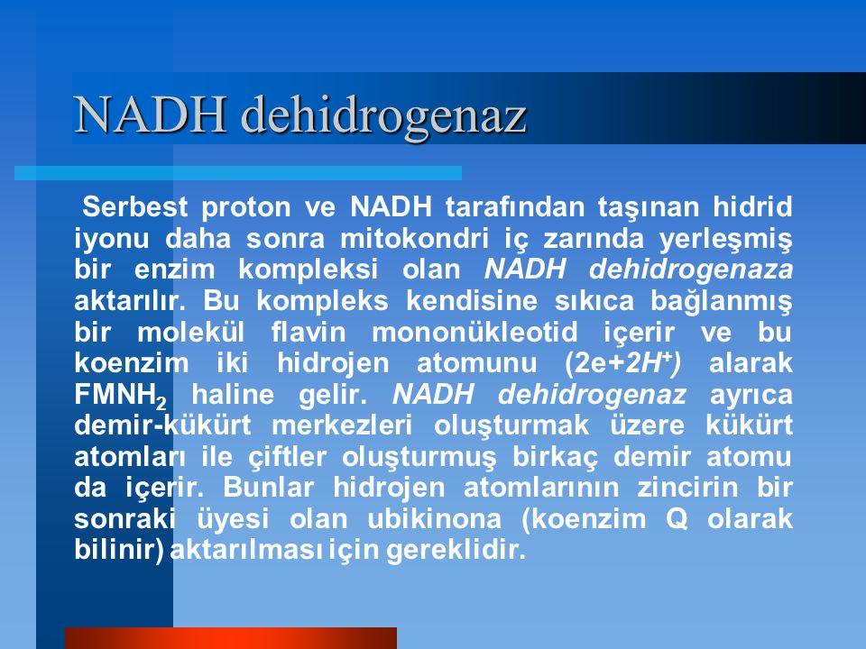 NADH dehidrogenaz