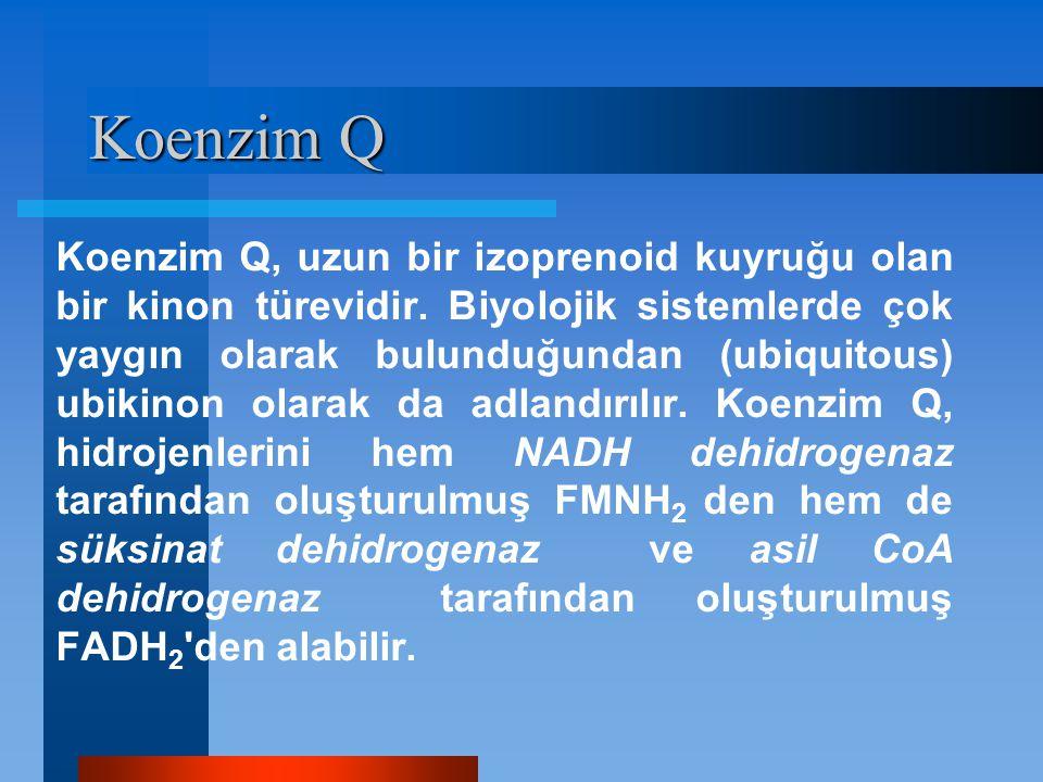 Koenzim Q