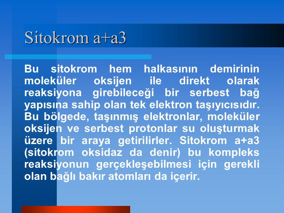 Sitokrom a+a3