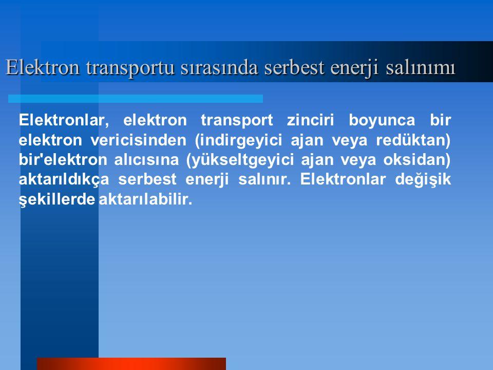 Elektron transportu sırasında serbest enerji salınımı