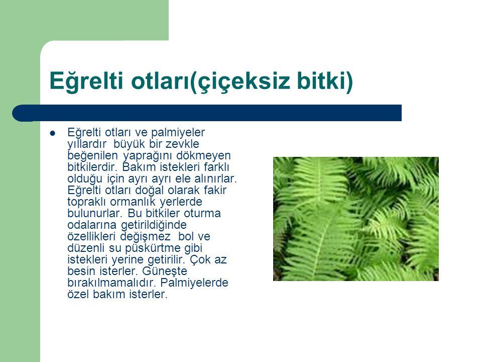 Eğrelti otları(çiçeksiz bitki)