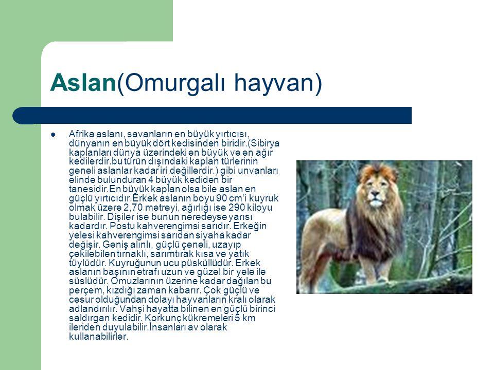 Aslan(Omurgalı hayvan)
