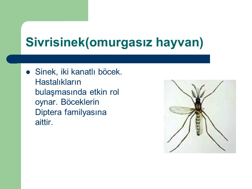 Sivrisinek(omurgasız hayvan)