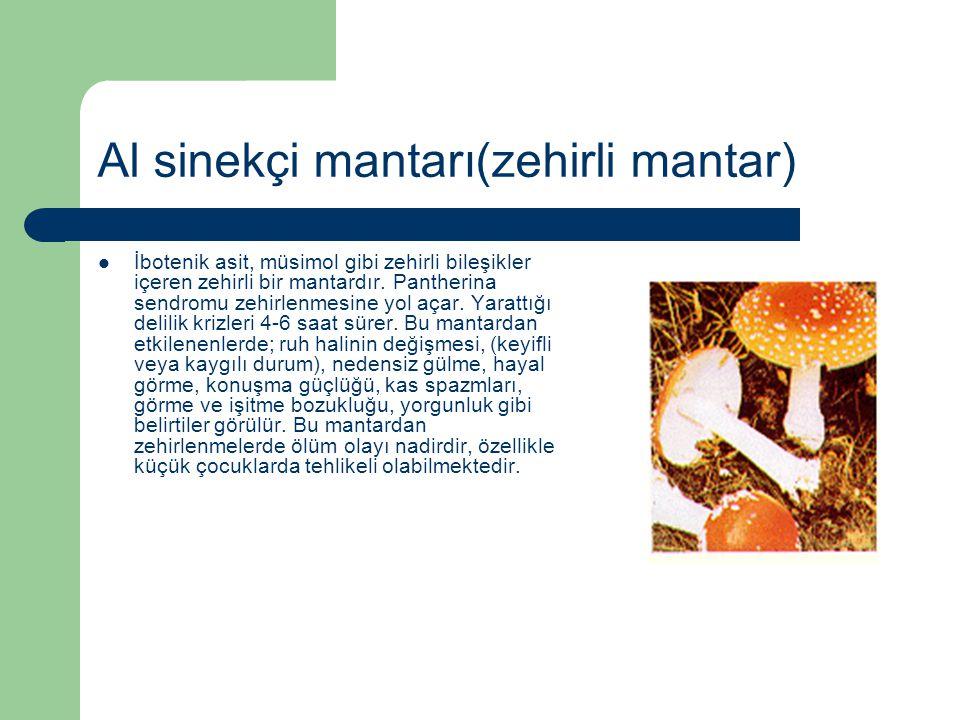 Al sinekçi mantarı(zehirli mantar)