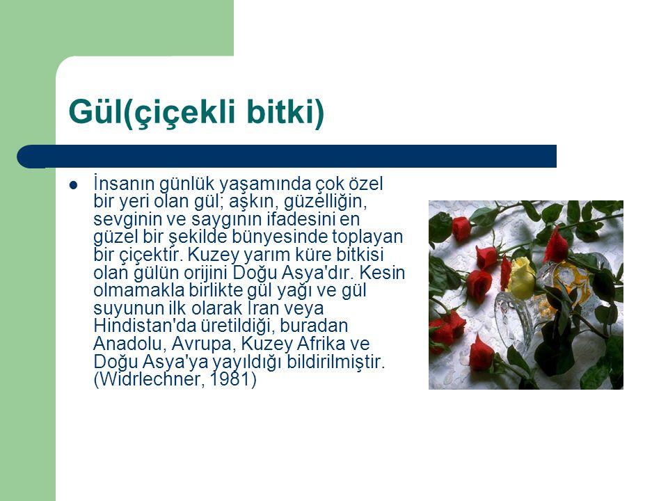 Gül(çiçekli bitki)
