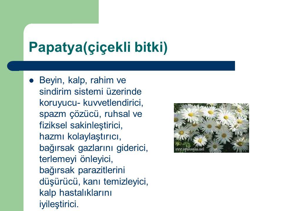 Papatya(çiçekli bitki)
