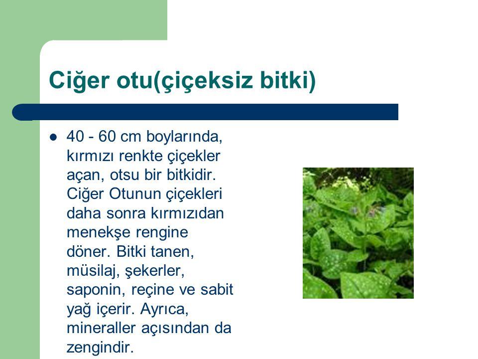 Ciğer otu(çiçeksiz bitki)