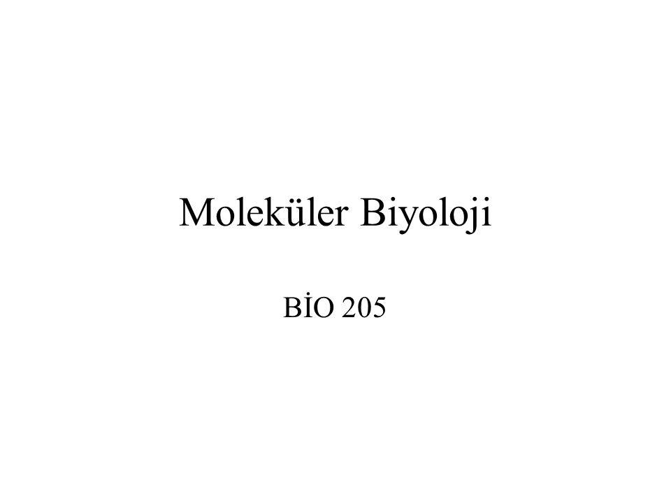 Moleküler Biyoloji BİO 205