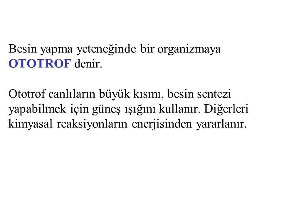 Besin yapma yeteneğinde bir organizmaya OTOTROF denir