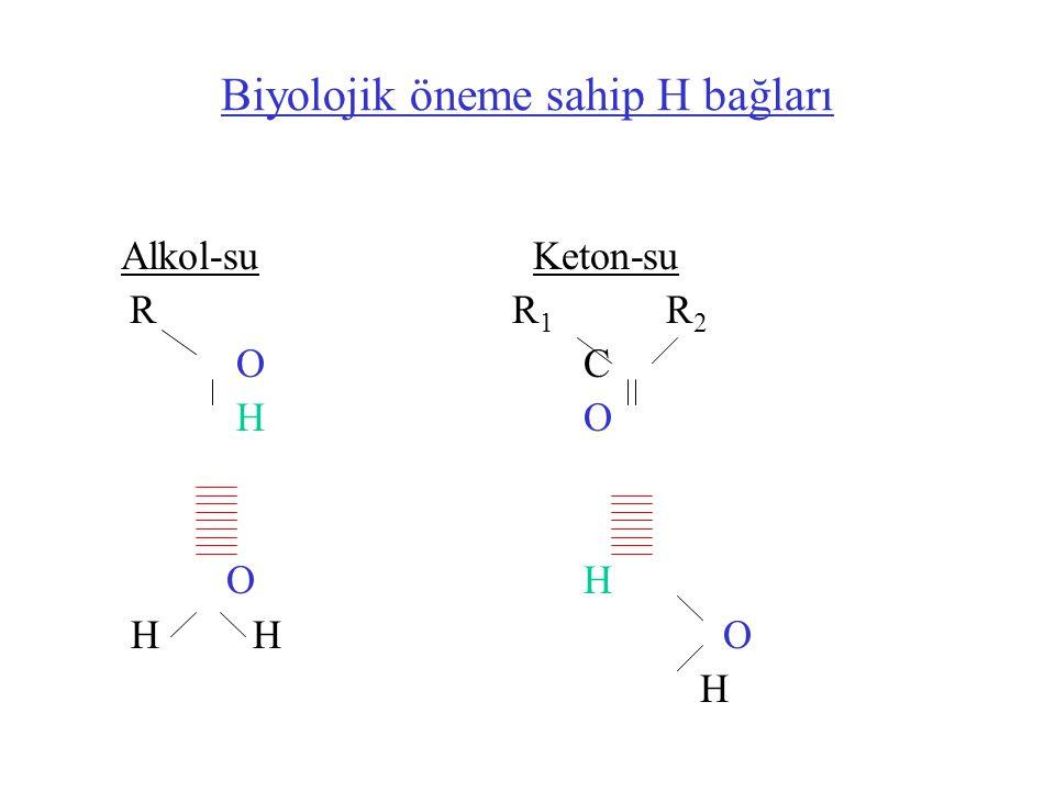 Biyolojik öneme sahip H bağları