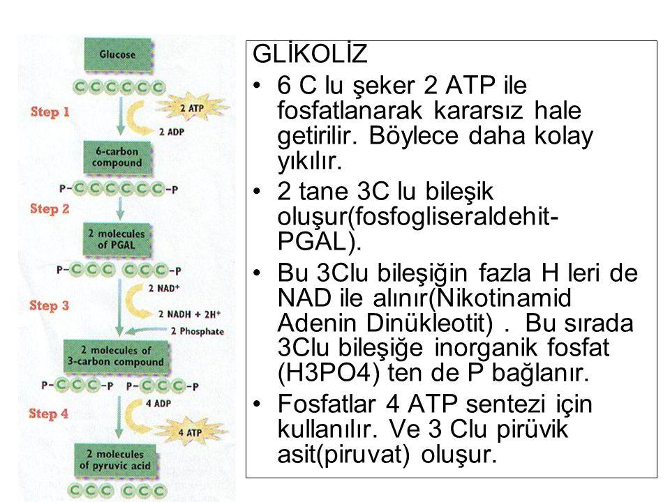 GLİKOLİZ 6 C lu şeker 2 ATP ile fosfatlanarak kararsız hale getirilir. Böylece daha kolay yıkılır.