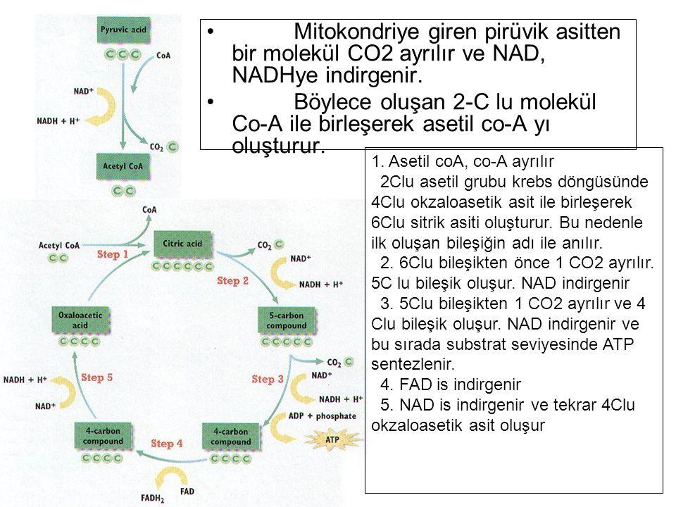 Mitokondriye giren pirüvik asitten bir molekül CO2 ayrılır ve NAD, NADHye indirgenir.