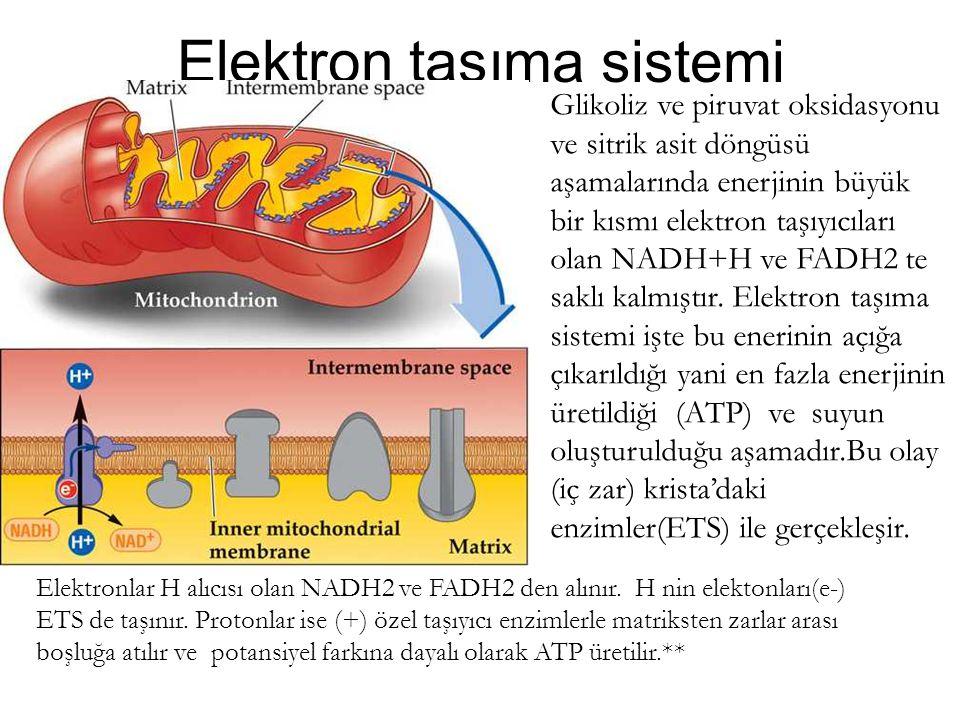 Elektron taşıma sistemi