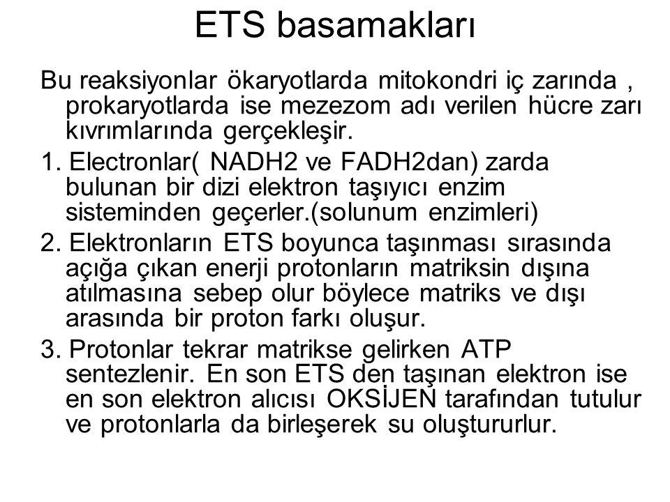 ETS basamakları Bu reaksiyonlar ökaryotlarda mitokondri iç zarında , prokaryotlarda ise mezezom adı verilen hücre zarı kıvrımlarında gerçekleşir.