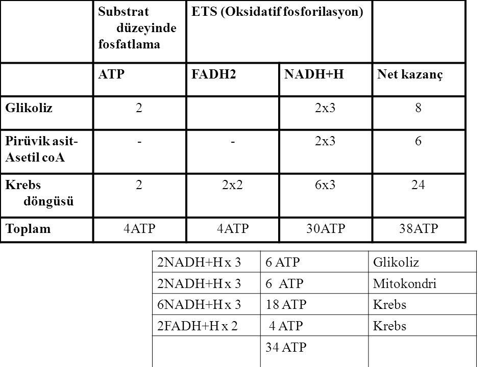 Substrat düzeyinde fosfatlama. ETS (Oksidatif fosforilasyon) ATP. FADH2. NADH+H. Net kazanç. Glikoliz.