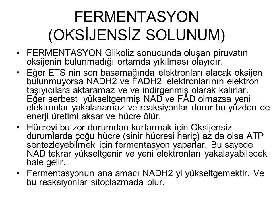 FERMENTASYON (OKSİJENSİZ SOLUNUM)